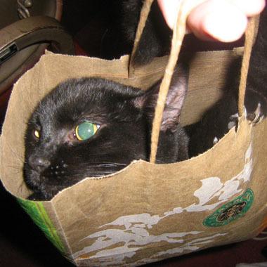 Kiwiinbag